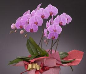 鮮やかで美しいピンクのお花が印象的です
