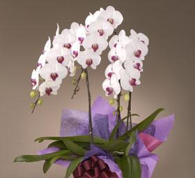 とってもかわいらしい花です
