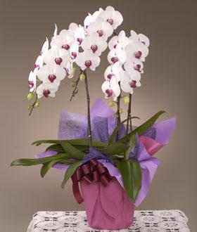 紅白のお花がとてもきれいです