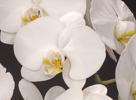 白色のお花が可憐でとてもきれいです