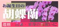 お誕生日の胡蝶蘭はこちら!