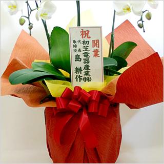 立て札をつけた花の写真